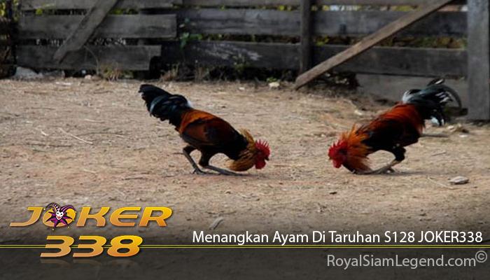 Menangkan Ayam Di Taruhan S128 JOKER338