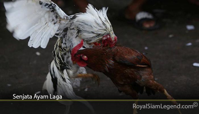 Senjata Ayam Laga