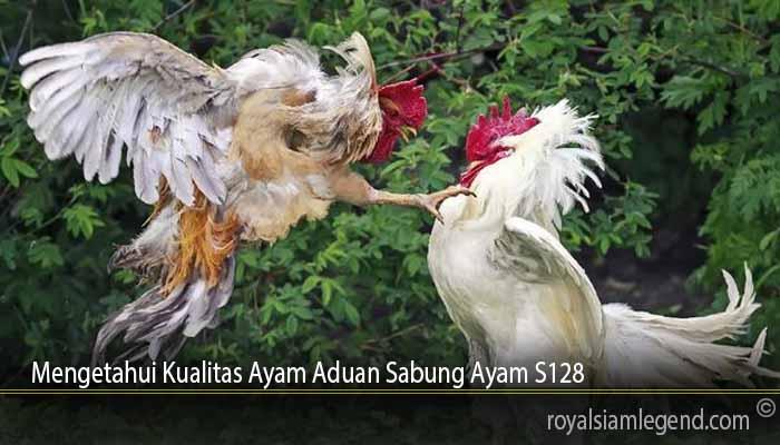 Mengetahui Kualitas Ayam Aduan Sabung Ayam S128